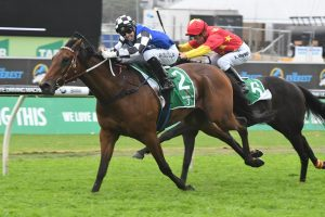 Pike Chases Caloundra Cup With Terra Sancta