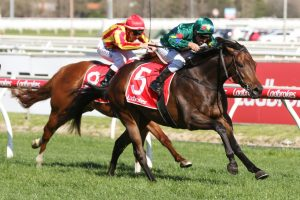 Impressive Prelude Win Sees Alligator Blood Firm in Caulfield Guineas Betting