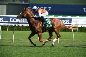 Expressway Stakes 2020 Winner Is Standout