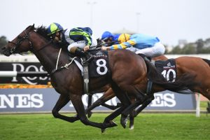 Brandenburg to trial again before 2020 Winx Stakes