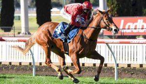 Brooklyn Hustle on trial for Moir Stakes