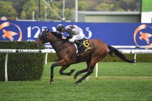 Kingston Town Stakes winner Taikomochi on target to give Waterhouse her 7th win in The Metropolitan