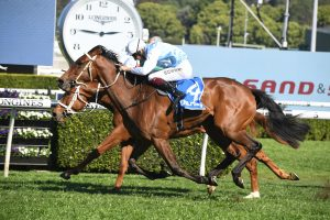 Kennedy Oaks on the agenda for Spring Champion Stakes winner Montefilia