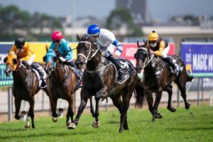 Shaquero Horse Form (Photo: Steve Hart) | Races.com.au