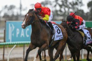 Aim Horse Form (Photo: Steve Hart) | Races.com.au