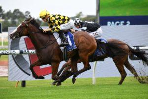 Mallory Horse Form (Photo: Steve Hart) | Races.com.au