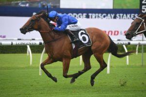 Tailleur Horse Form (Photo: Steve Hart) | Races.com.au