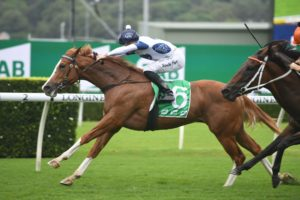 Every Rose Horse Form (Photo: Steve Hart) | Races.com.au