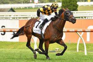 Probabeel Horse Form (Photo: Ultimate Racing Photos) | Ladbrokes.com.au