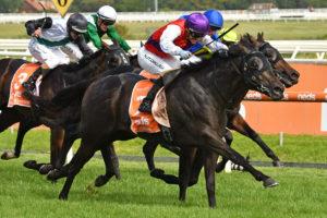 Artorius Horse Form (Photo: Ultimate Racing Photos) | Races.com.au