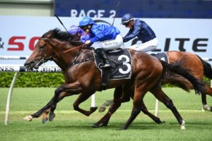 Anamoe Horse Form (Photo: Steve Hart) | Races.com.au