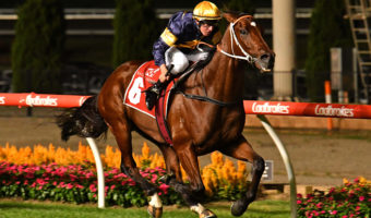 Masked Crusader Heads All Aged Stakes 2021 Field & Odds