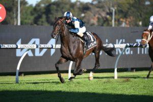 Sir Dragonet Horse Form (Photo: Steve Hart) | Races.com.au