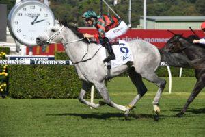 Senor Toba Horse Form (Photo: Steve Hart) | Races.com.au