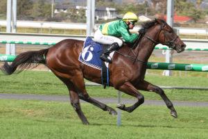 Savatoxl Horse Form (Photo: Jenny Barnes) | Races.com.au