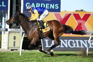 Knights Order Horse Form | Photo: Steve Hart | Races.com.au