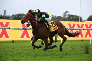 Stockman Horse Form (Photo: Steve Hart) | Races.com.au