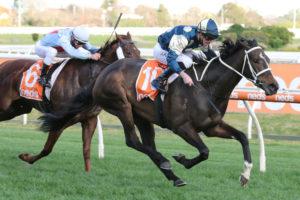 Sierra Sue Horse Form (Photo: Ultimate Racing Photos) | Races.com.au