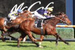 The Everest 2021 Tips & Exotic Selections