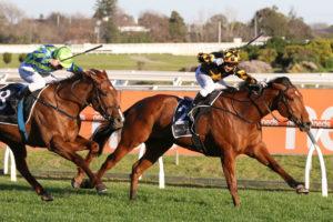 2021 Memsie Stakes Winner Behemoth Salutes Again