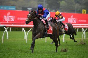 Zaaki. Photo: Steve Hart | Races.com.au