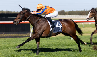 Entriviere Enters Invitation Calculations with Sheraco Stakes Win