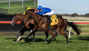 Anamoe (Photo: Martin King/Sportpix copyright)   Races.com.au