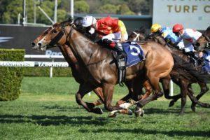 Aim (Photo: Steve Hart) | Races.com.au