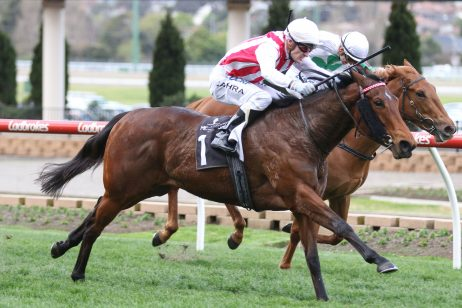 Shoals Leads 2018 Kevin Hayes Stakes Field & Odds