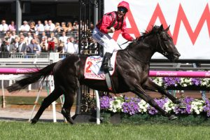Prized Icon Horse Form (Photo: Ultimate Racing Photos) | Races.com.au