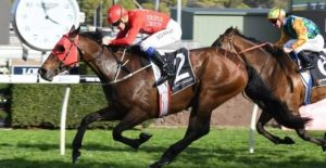 Redzel will be the star attraction at Flemington this afternoon. Photo by: Steve Hart