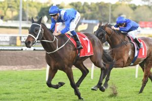 Winx (Photo: Steve Hart) - Races.com.au