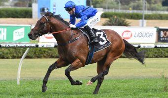 2021 Australia Stakes Field & Betting Update: Viridine Odds-On Favourite of Six