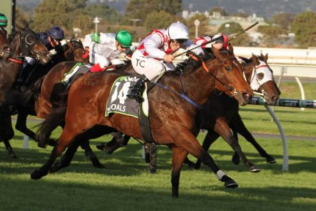 2018 The Goodwood Could be on For Shoals Next Race