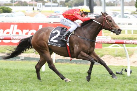 Voodoo Lad to weave his magic in 2018 Manikato Stakes