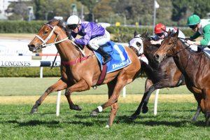 Fiesta (Photo: Steve Hart) - Races.com.au