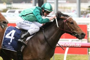 Humidor Horse Form (Photo: Ultimate Racing Photos) | Races.com.au
