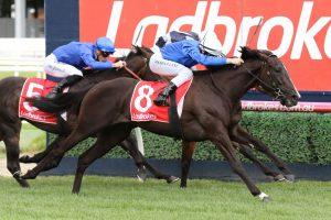 Lyre Horse Form. Photo: Ultimate Racing Photos | Races.com.au