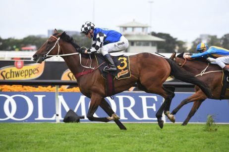 A Sky High Win Sees Red Cardinal Firm in Sydney Cup Betting