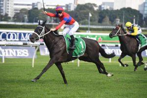 Verry Elleegant Horse Form (Photo: Steve Hart) | Races.com.au