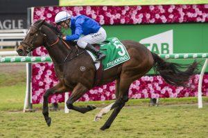 Trekking Horse Form (Photo: Steve Hart) | Races.com.au