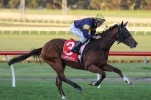 Buffalo River Horse Form (Photo: Ultimate Racing Photos) | Races.com.au