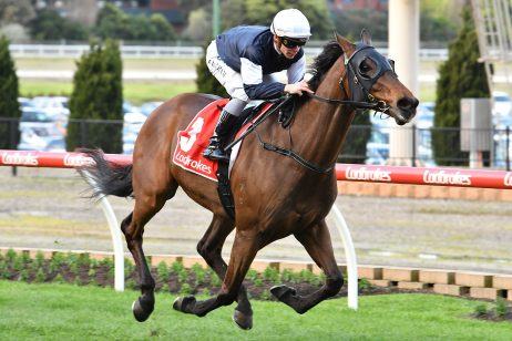 Underwood Stakes 2019 Odds Update: Homesman Market Mover