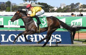 Mizzy Horse Form (Photo: Steve Hart) | Races.com.au