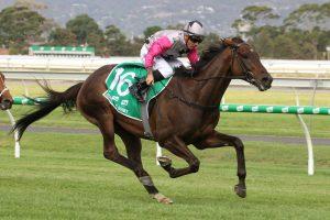 Surprise Baby Horse Form (Photo: Jenny Barnes)   Races.com.au