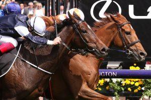 Vow And Declare Horse Form (Photo: Steve Hart)   Races.com.au