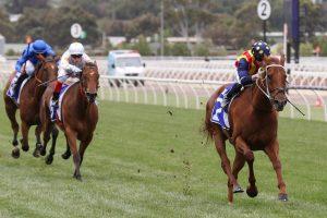 Nature Strip Horse Form (Photo: Ultimate Racing Photos) | Races.com.au