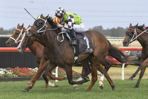 Mister Sea Wolf Horse Form (Photo: Steve Hart)   Races.com.au