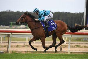 Farnan Horse Form (Photo: Steve Hart) | Races.com.au