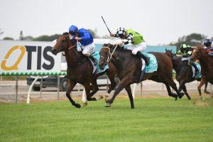 Madam Rouge Horse Form (Photo: Steve Hart)   Races.com.au